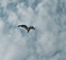 Bird In The Air by terrebo