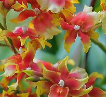 Festive orchids by zinchik