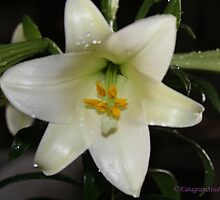 Easter Lilly by Katagram