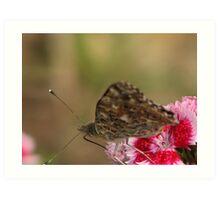 mmmmm.....Nectar!! Art Print