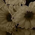 Petals by Victoria DeMore
