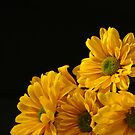 Yellow Flowers from Dustin by Victoria DeMore
