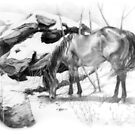 Horse in Snow by Luis Perez