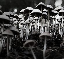 fungal fantasy by Steve Scully