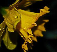 Bright up my day by LudaNayvelt
