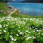 Flowers of the Lake by Barbara Burkhardt