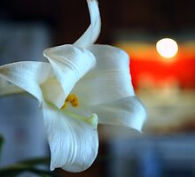 Easter Lily by Helena Haidner