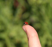 Hitchhiking Ladybug by Stephanie Sim