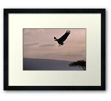 Vulture landing Framed Print