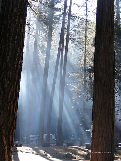 Campers Morning Smoke Through The Pines by NancyC
