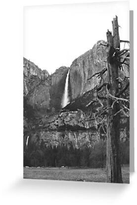 Upper & Lower Yosemite Falls (Black & White) by NancyC