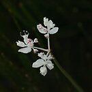 Unknown Flower Set 3/3 by beeden