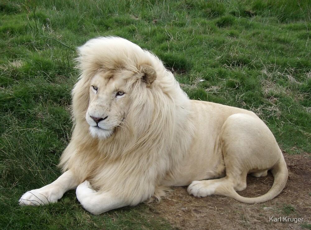 White King by Karl Kruger