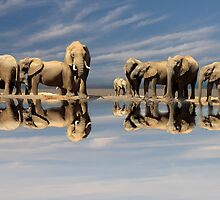REFLECTIONS by Mugsy