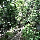 Green Trail by terrebo