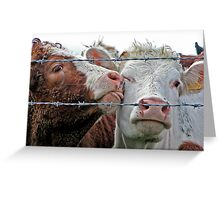 Cattle lick Greeting Card