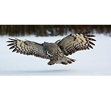 Hunting Great Grey Owl Photographic Print