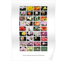Keukenhof Collage Poster