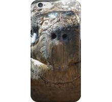 Terrific Tortoise! iPhone Case/Skin