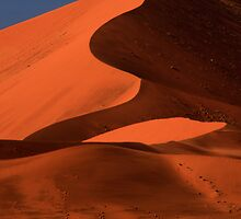 Big Dune Lone Tree, Sossusvlei, Namibia. Africa. by PhotosEcosse