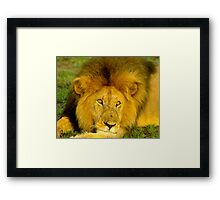 Simba of the Mara Framed Print