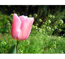 Spring bulbs Photographic Print