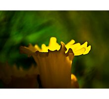 Cup of Sun Photographic Print