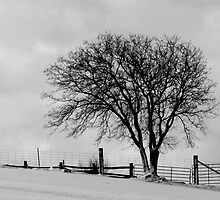 A Tree By a Gate in Winter by John Beamish