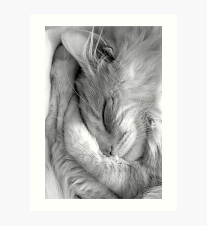 rocky sleeping Art Print