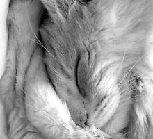 rocky sleeping by mickeyrose