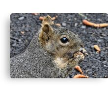 NutMuncher (best viewed large) Canvas Print