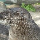 Otter by Edward Denyer