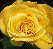 Yellow Rose by Ludwig Wagner