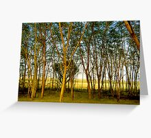Fever Trees Greeting Card