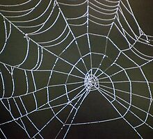 Spiders Web by Helena Haidner