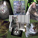 Cat Calendar by MichelleR