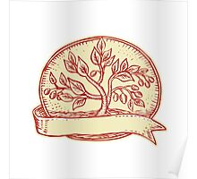 Olive Tree Ribbon Oval Etching Poster