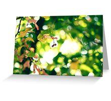 breathe the autumn air Greeting Card