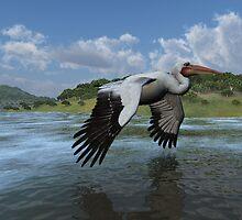American White Pelican by Ken Gilliland