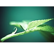 growing strong Photographic Print