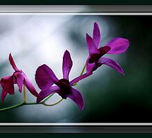 The Flower Speaks Volumes in It's Silence by Rick Wollschleger