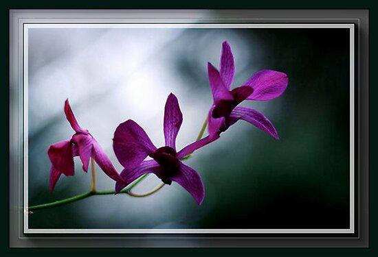 The Flower Speaks Volumes in It's Silence by Rick Wollschleger