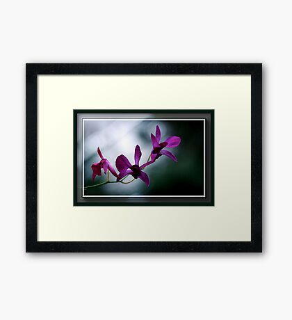 The Flower Speaks Volumes in It's Silence Framed Print
