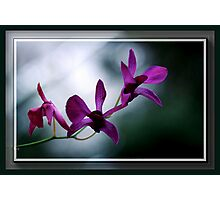 The Flower Speaks Volumes in It's Silence Photographic Print