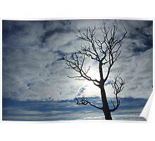 ...morning tree Poster