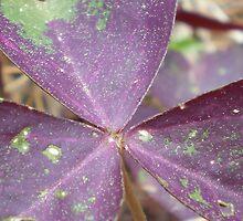 Purple Wings by Rebekah  McLeod