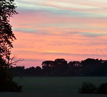 Shepherd's Delight  by Andrew Howson