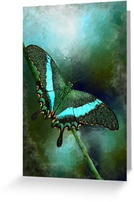 Emerald Peacock Swallowtail by Renee Dawson