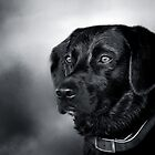 Black Lab Portrait - in Black &amp; White by Renee Dawson