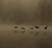 Fog Flyers by Dave Parrish